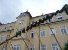 2011_Maibaumaufstellen_24